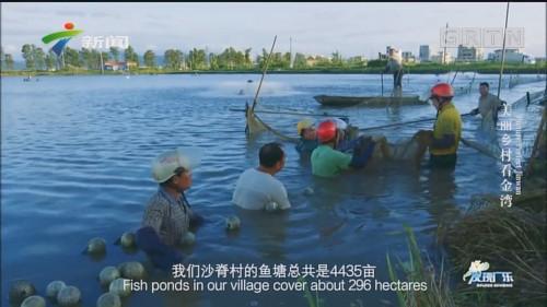 [HD][2019-10-02]发现广东:美丽乡村看金湾