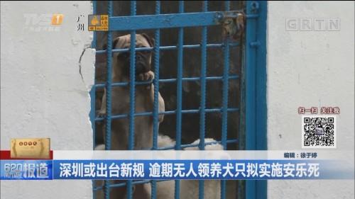 深圳或出台新规 逾期无人领养犬只拟实施安乐死
