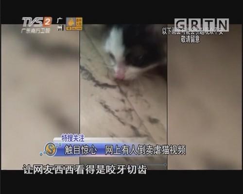触目惊心 网上有人倒卖虐猫视频