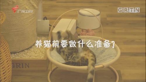 养猫前要做什么准备?