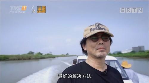 珠海高栏港蚝的养成记