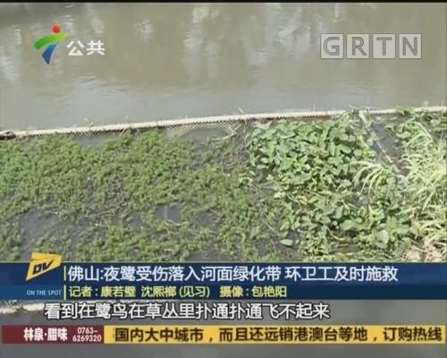 (DV现场)佛山:夜鹭受伤落入河面绿化带 环卫工及时施救