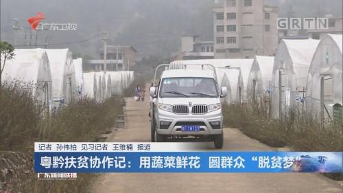 """粤黔扶贫协作记:用蔬菜鲜花 圆群众""""脱贫梦"""""""