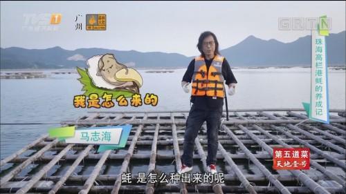 [HD][2019-10-22]美食特攻:珠海高栏港蚝的养成记
