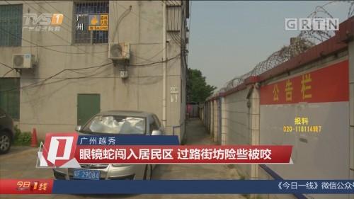广州越秀:眼镜蛇闯入居民区 过路街坊险些被咬