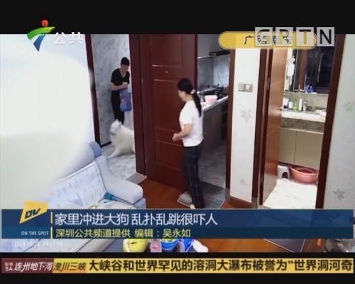 (DV现场)家里冲进大狗 乱扑乱跳很吓人