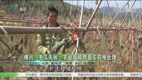 佛冈:冬瓜失收 农业局称跨县买药难处理