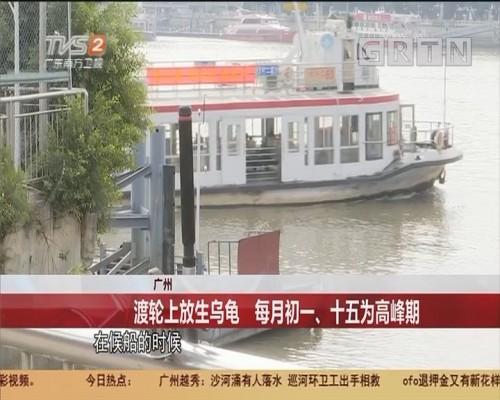 广州 渡轮上放生乌龟 每月初一、十五为高峰期