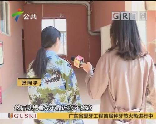 广州:保护动物误闯高校内 专家:濒危物种斑灵狸