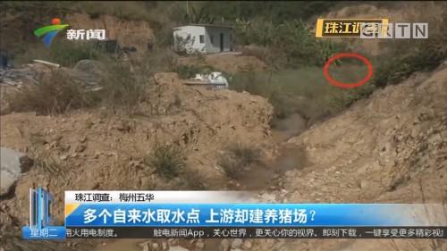 珠江调查:梅州五华 多个自来水取水点 上游却建养猪场?