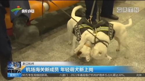 浙江杭州:机场海关新成员 年轻萌犬新上岗