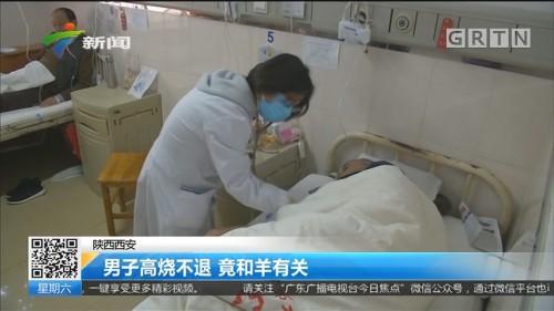陕西西安:男子高烧不退 竟和羊有关