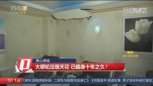 佛山禅城:大蟒蛇压爆天花 已藏身十年之久?