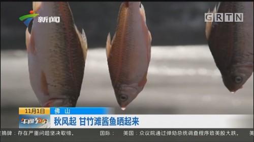 佛山:秋风起 甘竹滩酱鱼晒起来