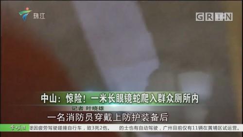 中山:惊险!一米长眼镜蛇爬入群众厕所内