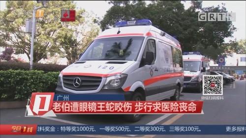 广州:老伯遭眼镜王蛇咬伤 步行求医险丧命