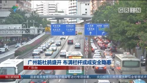 广州簕杜鹃盛开 布满栏杆或成安全隐患