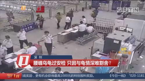 深圳:腰缠乌龟过安检 只因与龟情深难割舍?