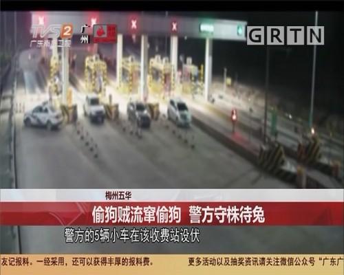 梅州五华:偷狗贼流窜偷狗 警方守株待免