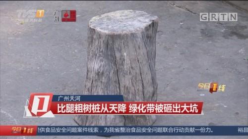 广州天河:比腿粗树桩从天降 绿化带被砸出大坑