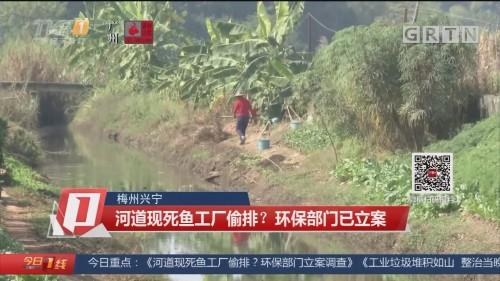 梅州興寧:河道現死魚工廠偷排?環保部門已立案