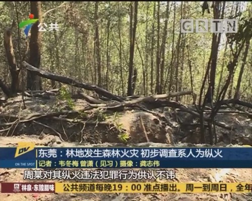(DV现场)东莞:林地发生森林火灾 初步调查系人为纵火