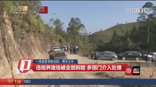 一线独家调查追踪:梅州五华 违规养猪场被全部拆除 多部门介入处理