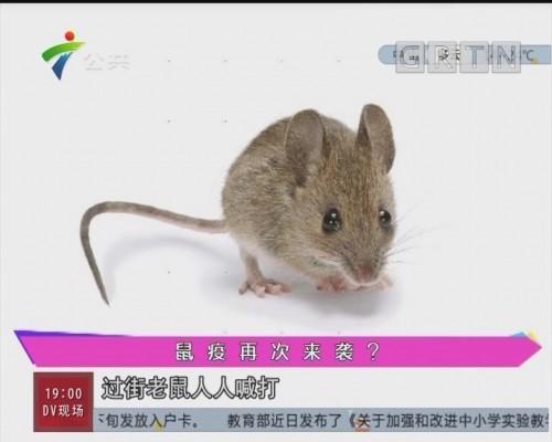 鼠疫再次来袭?