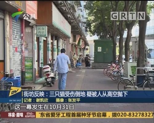 (DV现场)街坊反映:三只猫受伤倒地 疑被人从高空抛下