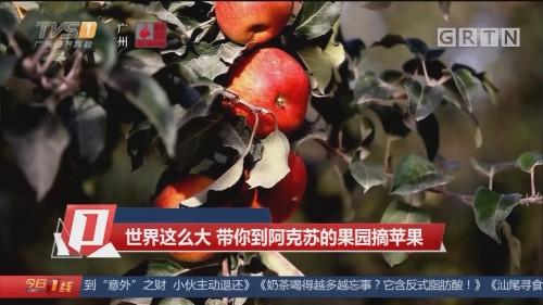 世界这么大 带你到阿克苏的果园摘苹果