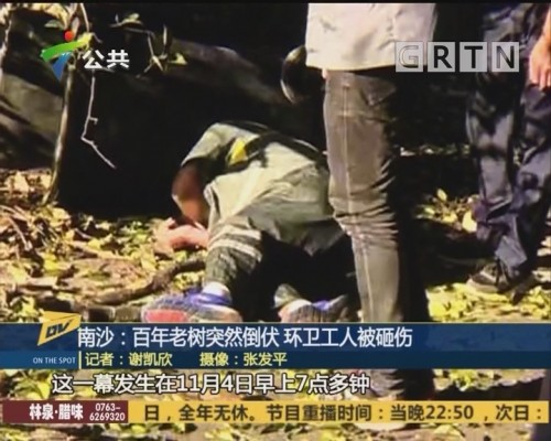 (DV现场)南沙:百年老树突然倒伏 环卫工人被砸伤