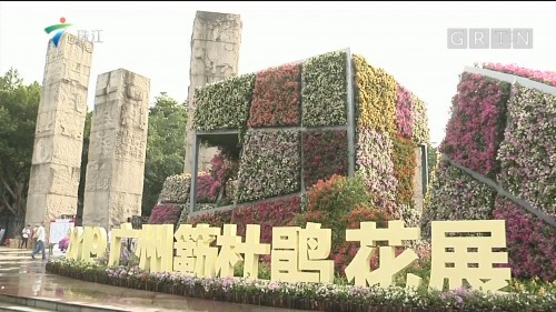 广州:簕杜鹃花盛会姹紫嫣红 雕塑公园展新姿