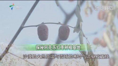 探秘阿克苏红枣种植基地