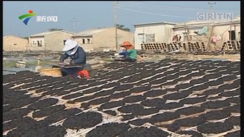 潮州:饶平海山紫菜喜获丰收
