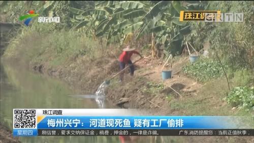 珠江调查 梅州兴宁:河道现死鱼 疑有工厂偷排