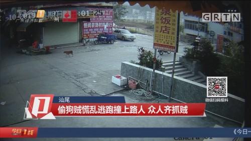 汕尾:偷狗贼慌乱逃跑撞上路人 众人齐抓贼