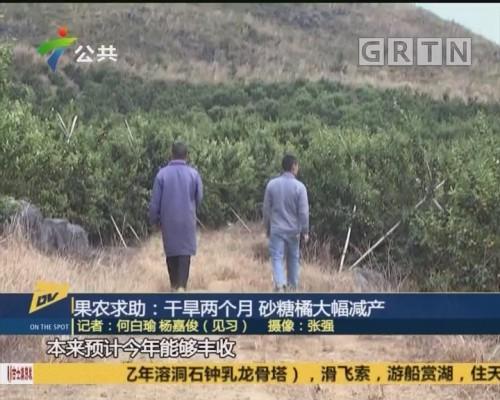 (DV现场)果农求助:干旱两个月 砂糖橘大幅减产