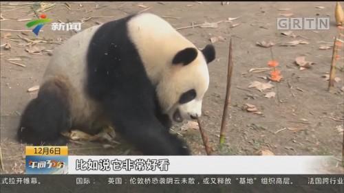 上海野生动物园:多措施应对低温天气 调整动物膳食平安过冬