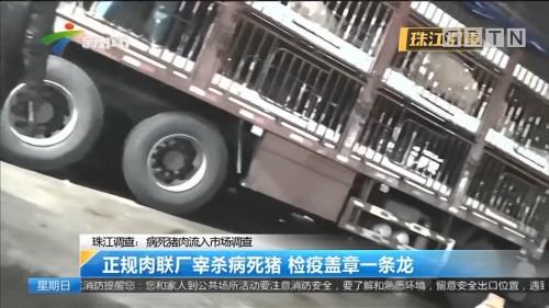 珠江调查:病死猪肉流入市场调查 正规肉联厂宰杀病死猪 检疫盖章一条龙