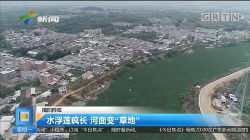 """揭阳榕城 水浮莲疯长 河面变""""草地"""""""