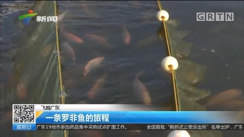 飞越广东:一条罗非鱼的旅程