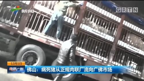 佛山:病死猪从正规肉联厂流向广佛市场