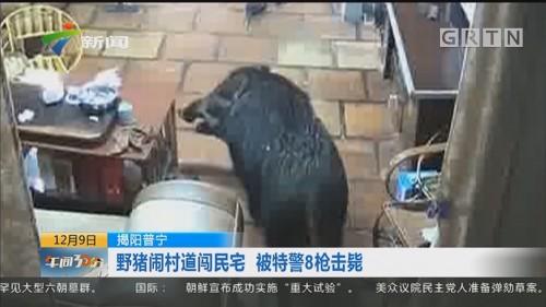 揭阳普宁:野猪闹村道闯民宅 被特警8枪击毙