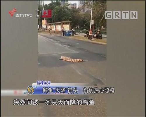 """鳄鱼""""天降""""街头 街坊热心照料"""