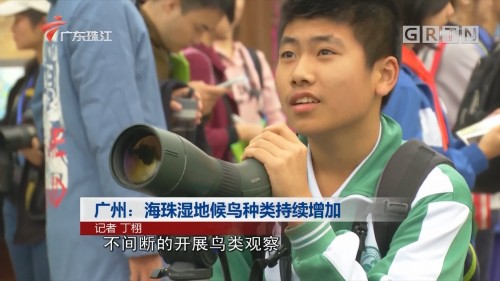 广州:海珠湿地候鸟种类持续增加