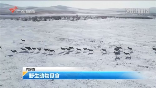 内蒙古 野生动物觅食