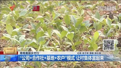"""南粤美丽乡村行 """"公司+合作社+基地+农户""""模式 让村集体富起来"""