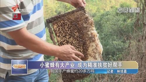 小蜜蜂有大产业 成为精准扶贫好帮手