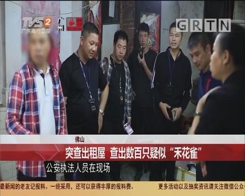 """佛山 突查出租屋 查出数百只疑似""""禾花雀"""""""