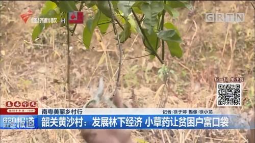 南粤美丽乡村行 韶关黄沙村:发展林下经济 小草药让贫困户富口袋